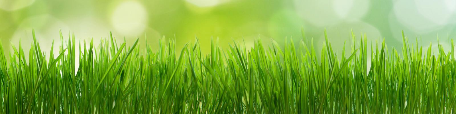 Green-IT EDV & IT-Dienstleistung